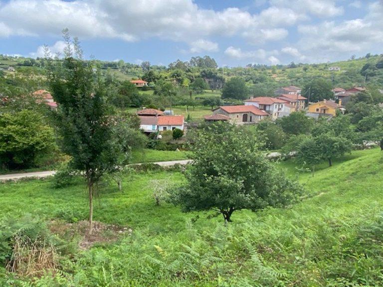 Fincas Asturias